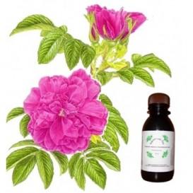 Гидролат розы морщинистой 100 мл (Бархатный лес)